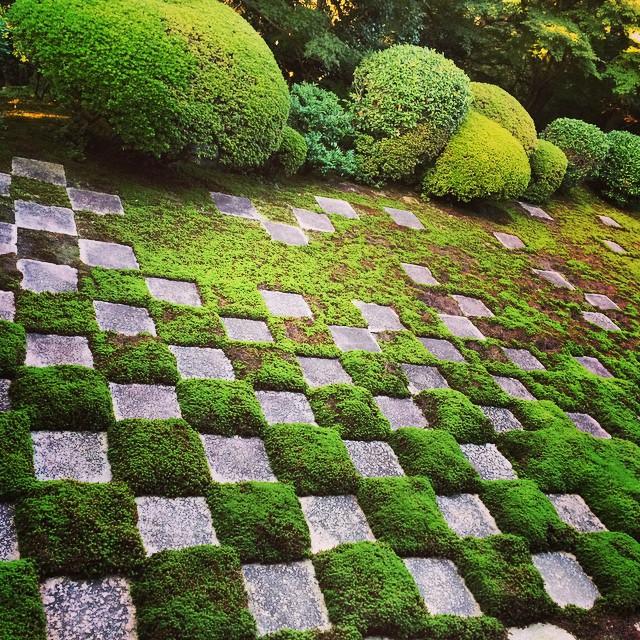 の にて 以前、入館時間過ぎていたのに無理矢理入れてもらって大満足の日本庭園でした。 碁盤の目のようになった石畳と苔のコントラストがとても美しいお庭でした。 裏庭というのにこの手の入れよう、さすが京都です。